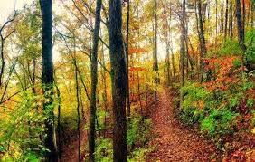 14 Trails