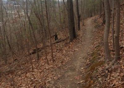 15 Trails