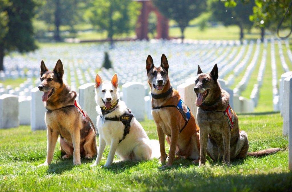 WarDog Memorial March Presented by PetSafe