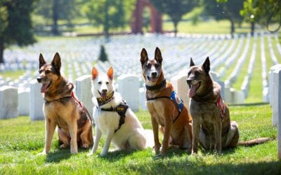 VHSF WAR DOG MEMORIAL DOG MARCH – Registration Open!